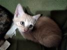 Котята, рождившиеся 10 июня, очень ждут любящих хозяев.