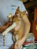 Отдам котят даром