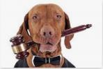Юридические споры с Ветеринарными клиниками в С-Петербурге