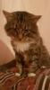 Крупный, ласковый кот